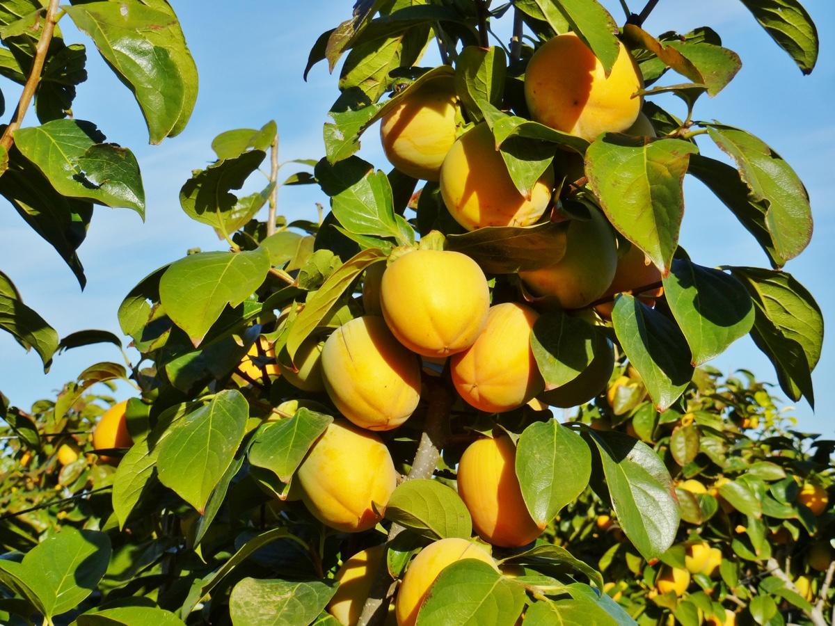 il-frutto-melotto13
