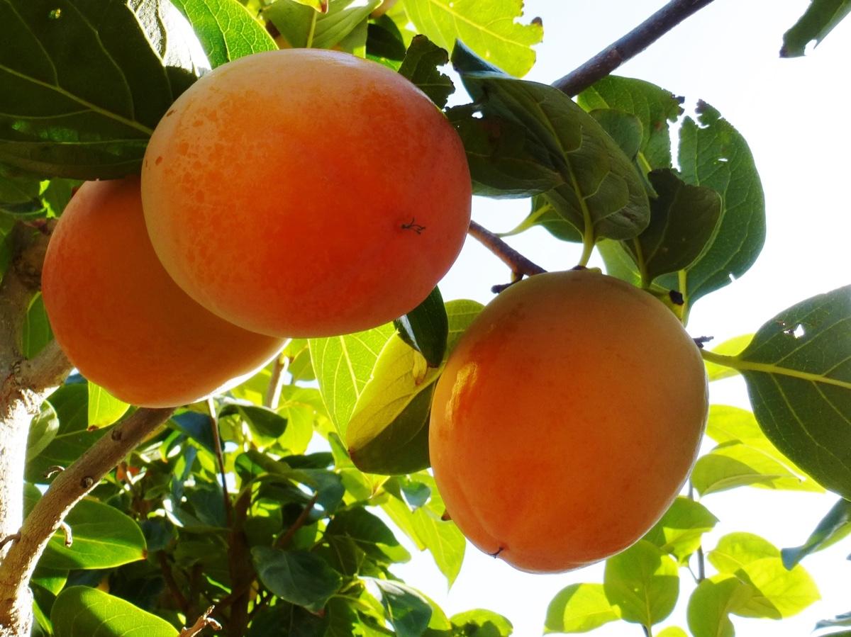 il-frutto-melotto15