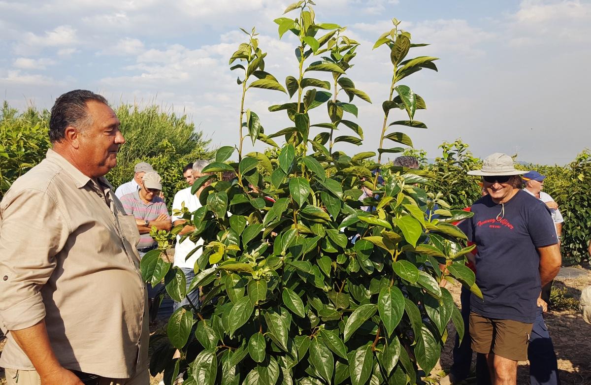potatura-verde-melotto-31